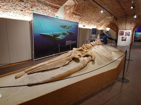 Museo Paleontologico territoriale dell'Astigiano e del Monferrato
