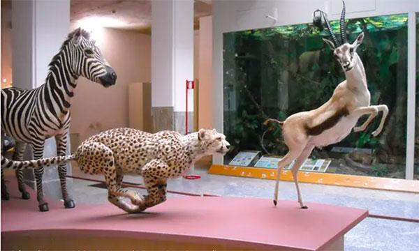 """Museo di Storia Naturale """"Faraggiana Ferrandi"""""""