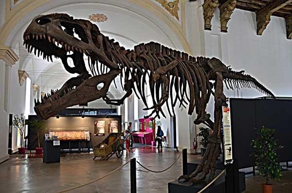 Museo regionale di scienze naturali torino