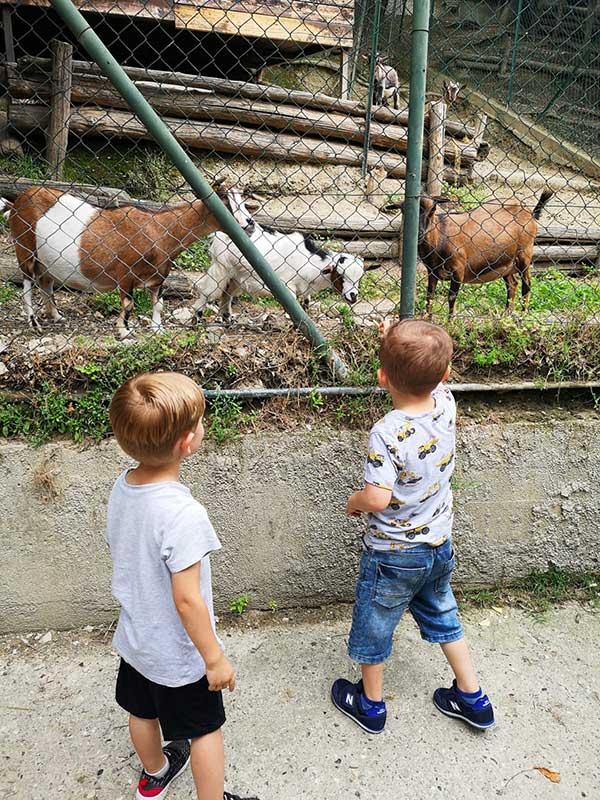 bambini con animali