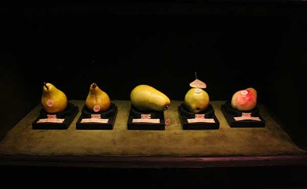 museo frutta