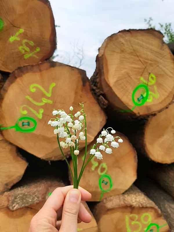 tronchi legno e fiori