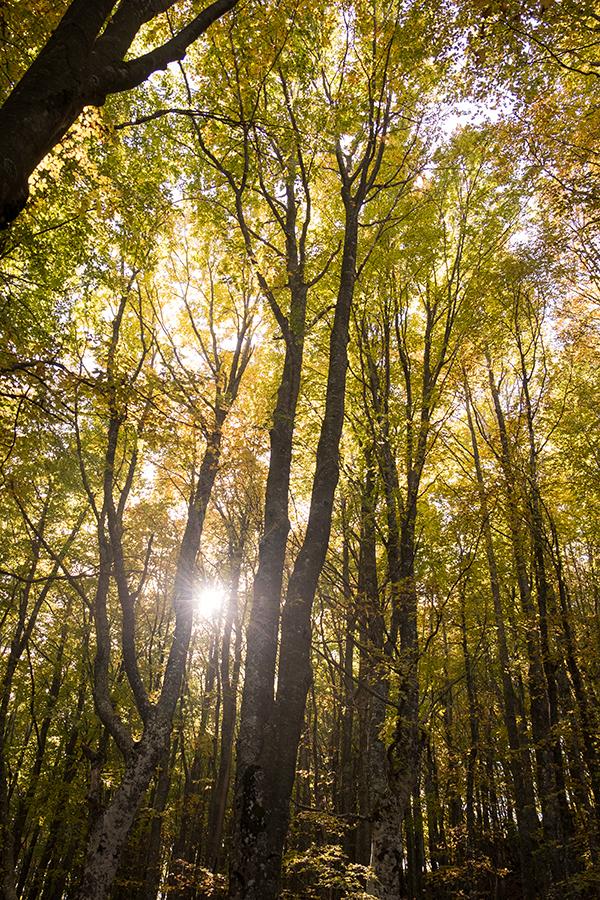 il sole mitra tra i rami sul sentiero del Monte Ebro