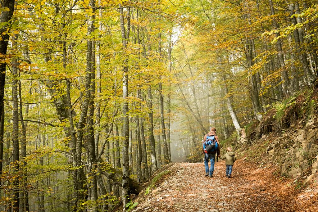 Camminata sul Monte Ebro: foliage e panorama a 360 gradi