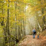 Papà e figlio camminano nella faggeta in autunno