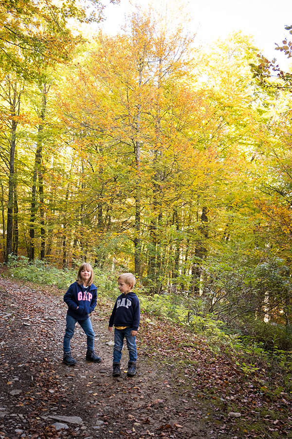 bambini sul sentiero nel bosco