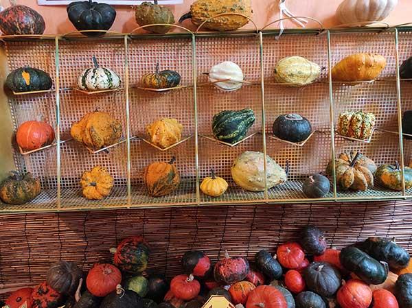 zucche ornamentali tutto zucche piemonte